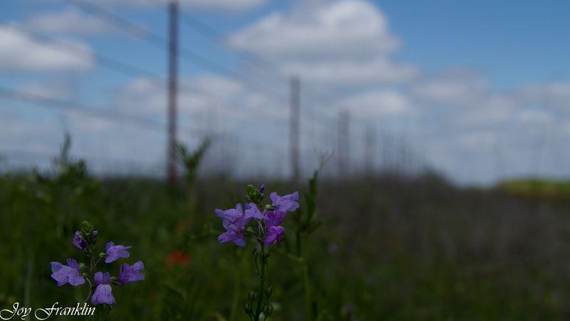 Purple flowers bokeh-1