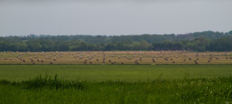 Big hay field-1
