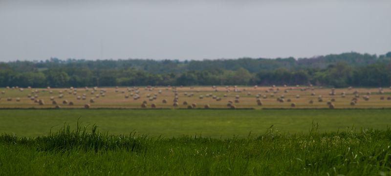 Big hay field-1