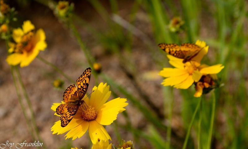 Butterfly Garden (1 of 1)