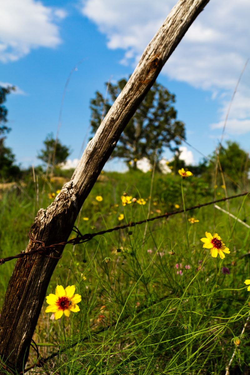 Fence and field of flowers (1 of 1)