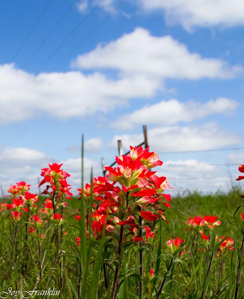 Pretty flowers-1