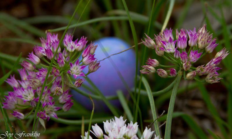 Purple Easter Eggs-1