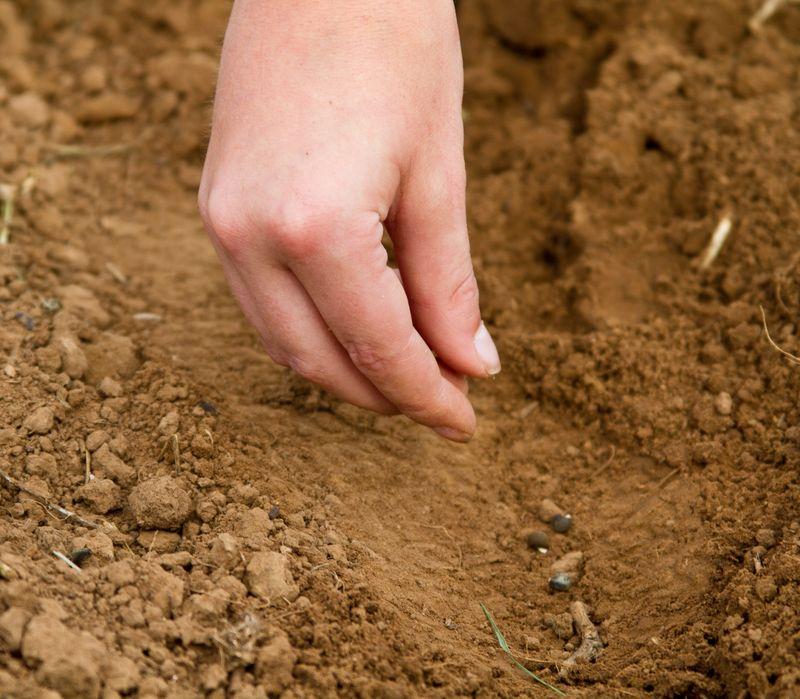 Justin planting seeds