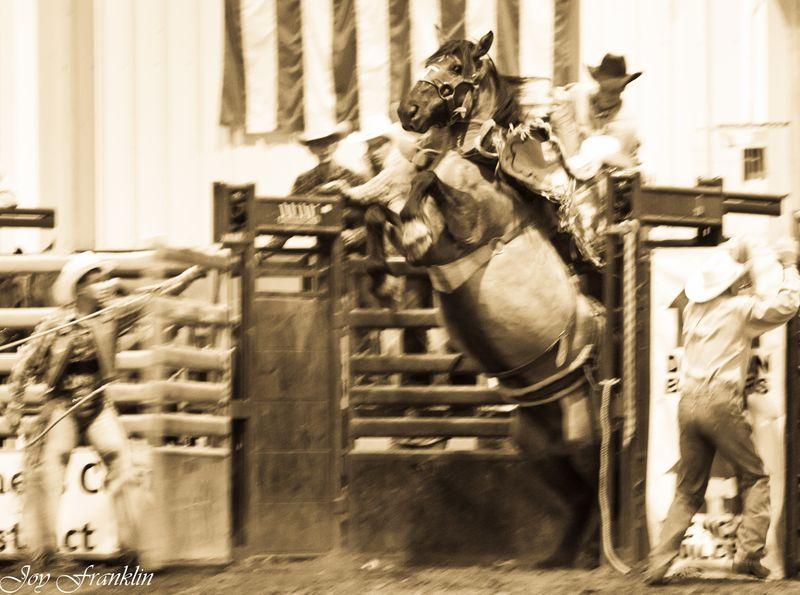 Buckin' Bronc (1 of 1)-2