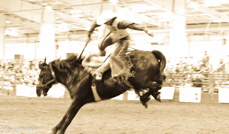Bucking Bronco at the Rodeo sepia (1 of 1)