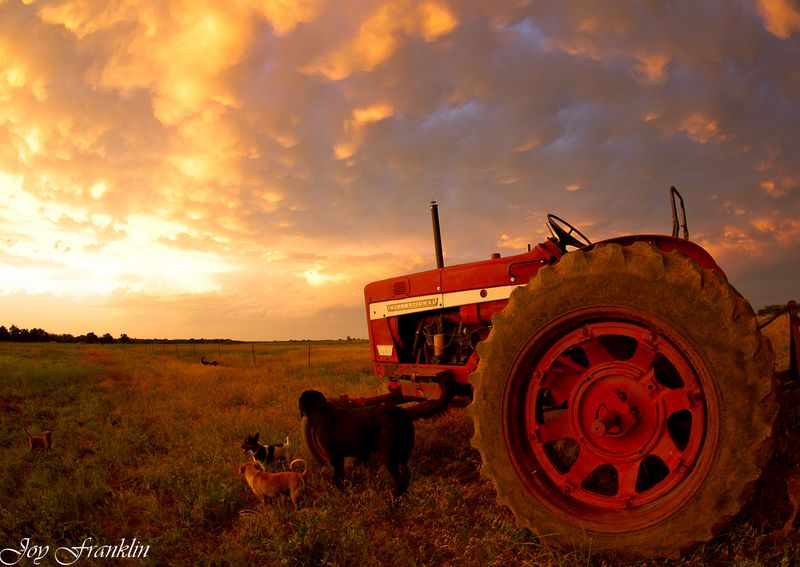 Daddy's Tractor in the Field-1009