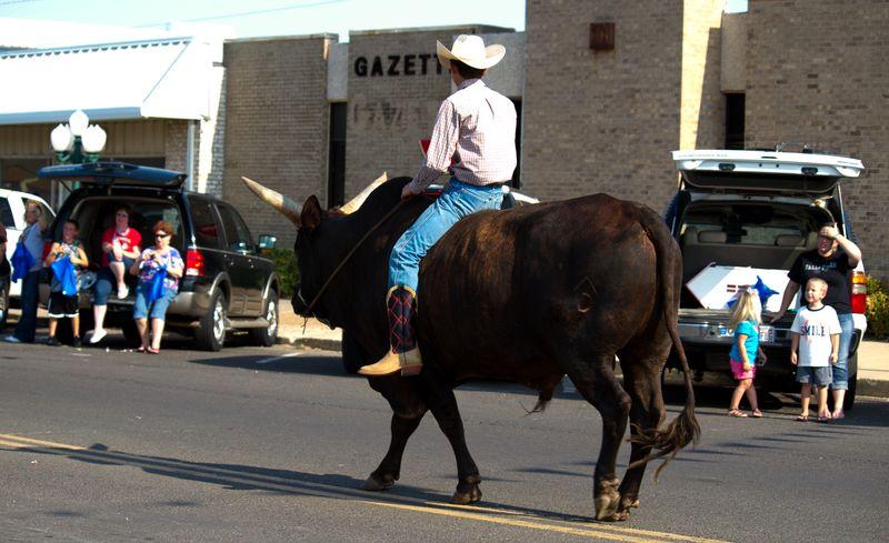 Guy riding a bull through a parade-5142