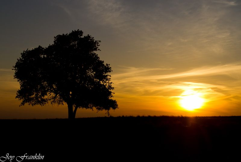 Tree with the sun setting beside it-1