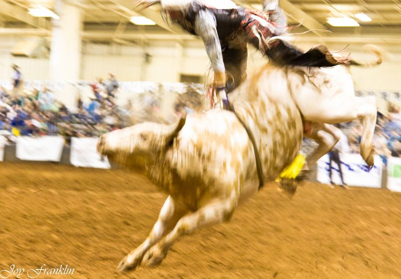 Blurry Bull Riding  (1 of 1)