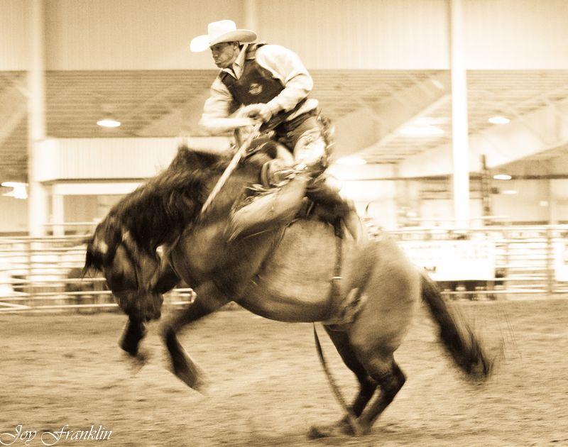 My Little Pony (1 of 1)