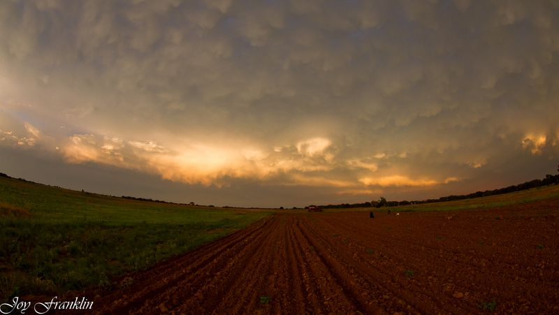 Field and clouds -0880