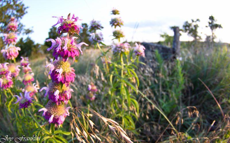Flower on the range-2120