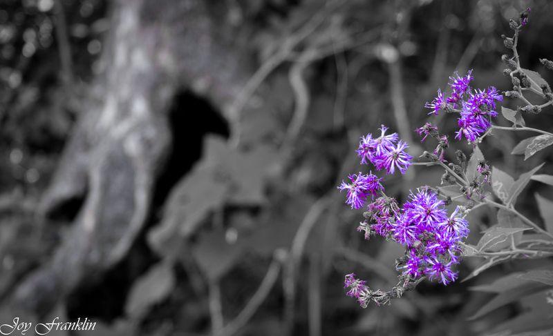 Pop of purple-4089