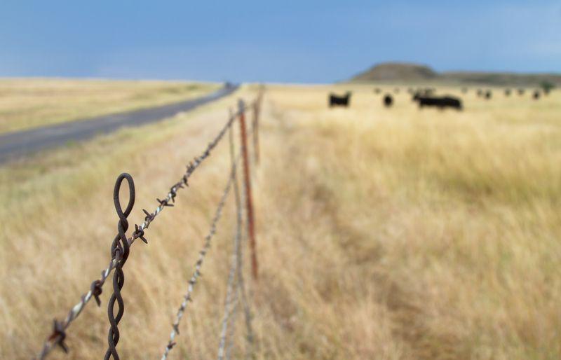 Oklahoma Pastoralism -4882