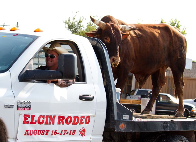 Bull Riding on a Pickup truck Elgin Rodeo -5135