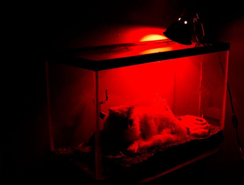 Cat in Terrarium -5724