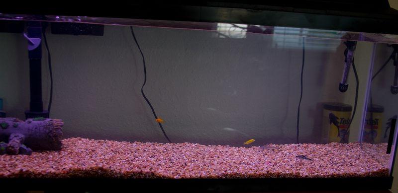 50 gallon fishtank-5754