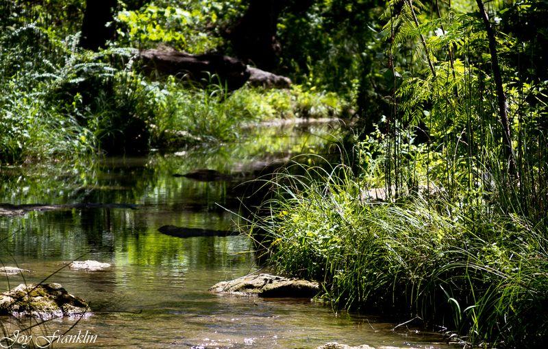 Travertine Creek-4047