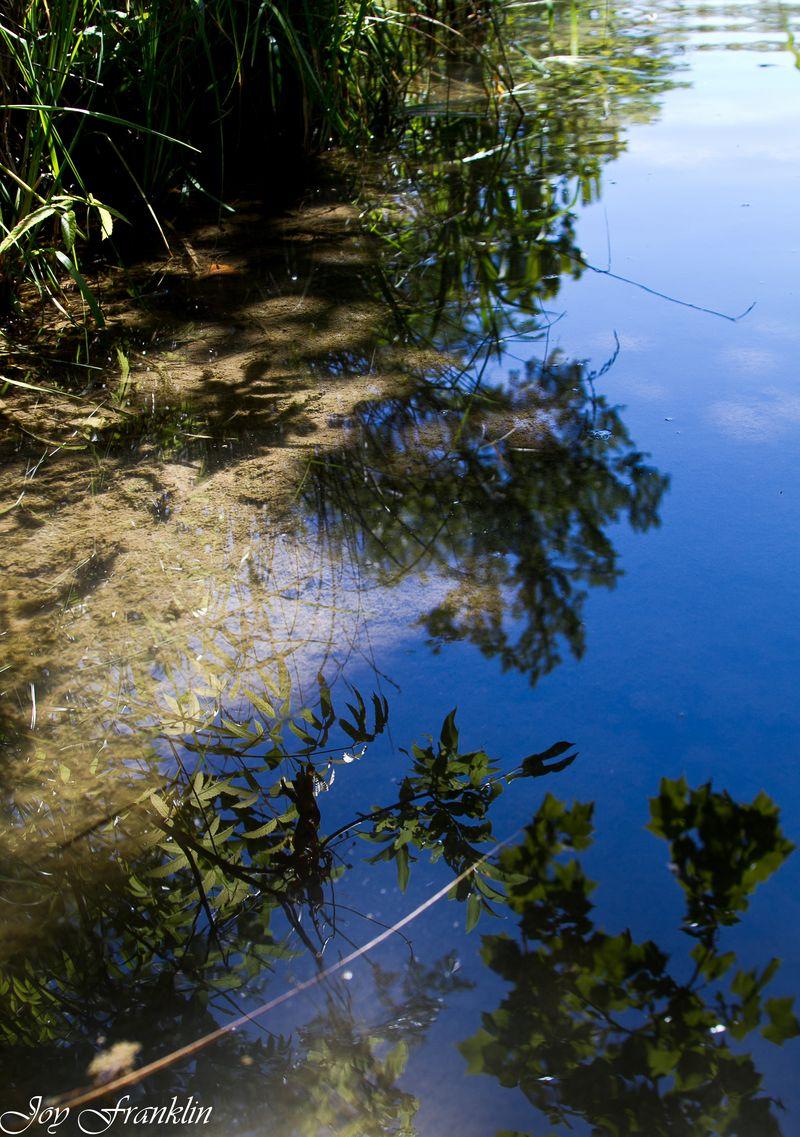 Reflections in Travertine Creek -4024