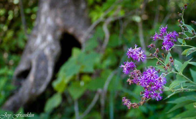 Flower in tree-4089