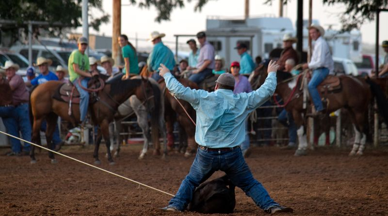 Calf roping at old settlers days-4450