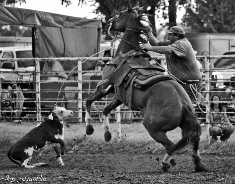 Calf roping at Velma-4501