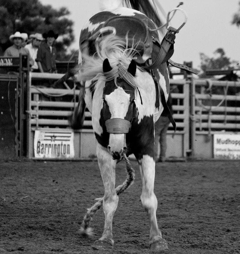 Rush Springs Rodeo -5202