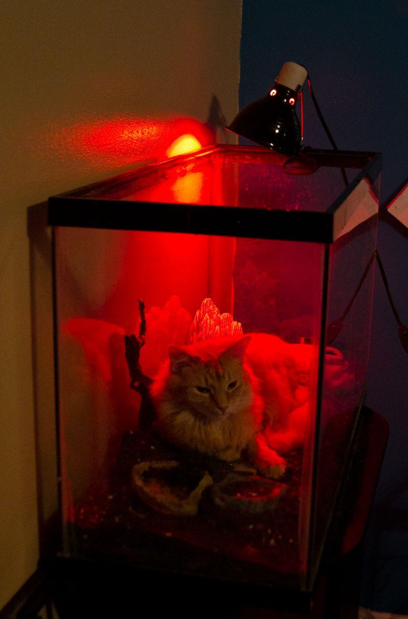 Cat in Terrarium -5727