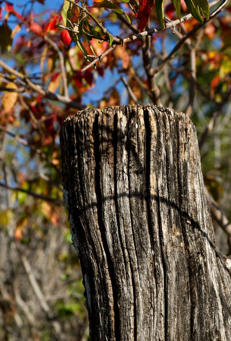Old wooden Fencepost -0103