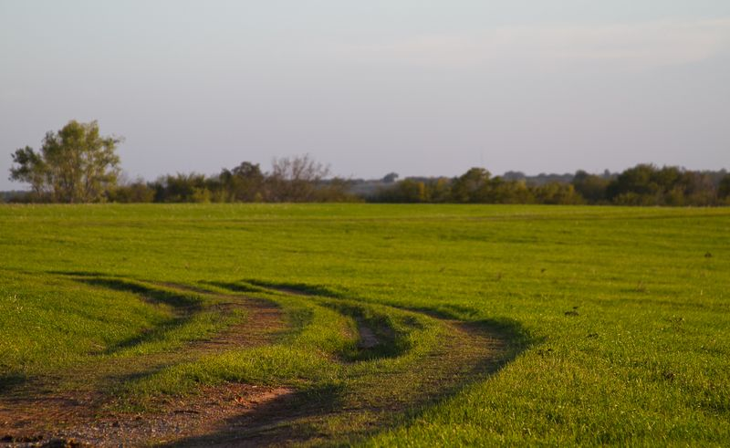 Fields in october-0812