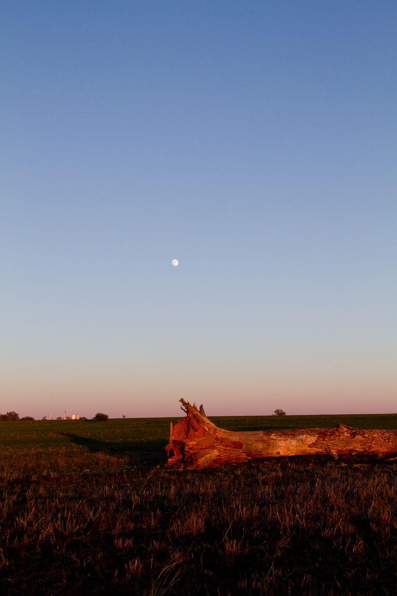 Tree and Moon -2040