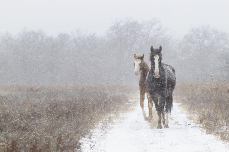 Christmas Snow in Oklahoma 2012