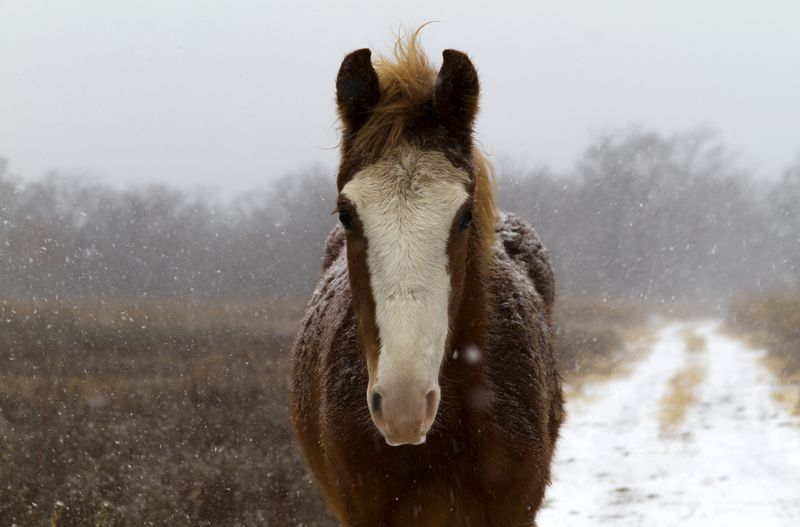 Christmas snow and horse