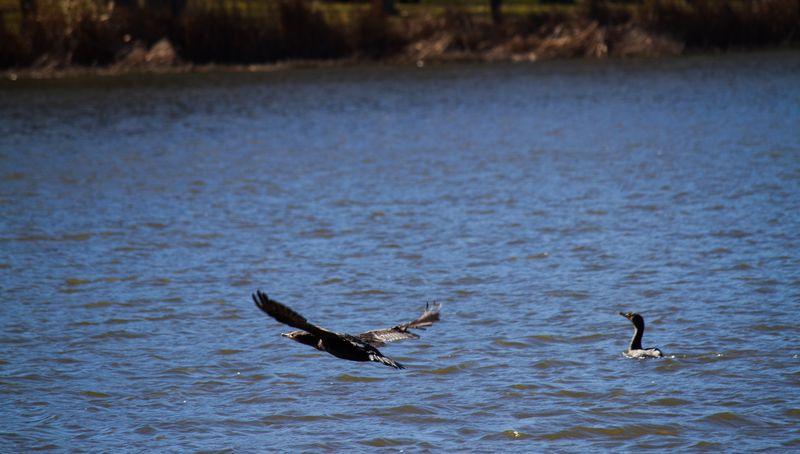 Wildlife at Raymond Gary State Park-7075