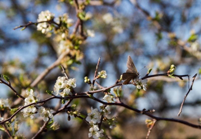 Spring buds-9321