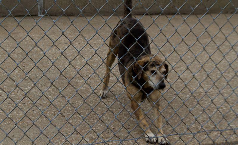 Dog at the Dam-9449