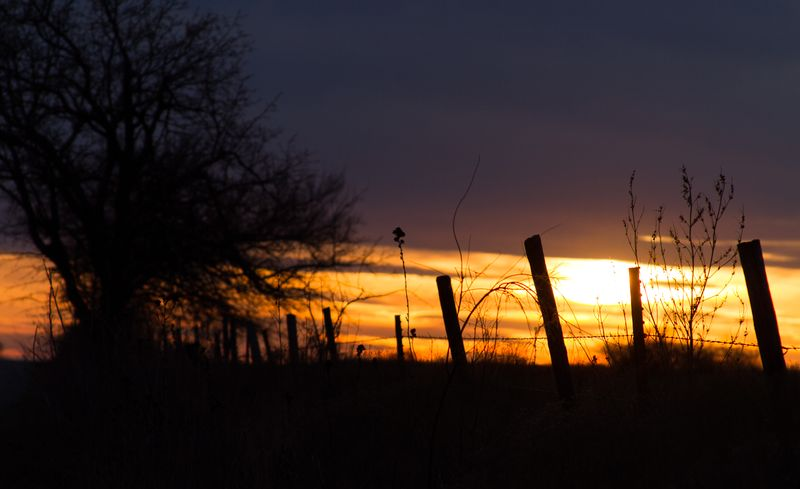 Sunset  and fence-9925