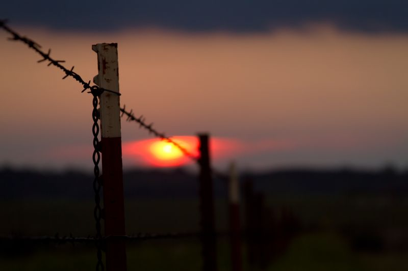 Fenced In-8374