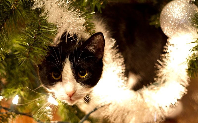 Scratchy Under the Tree-1
