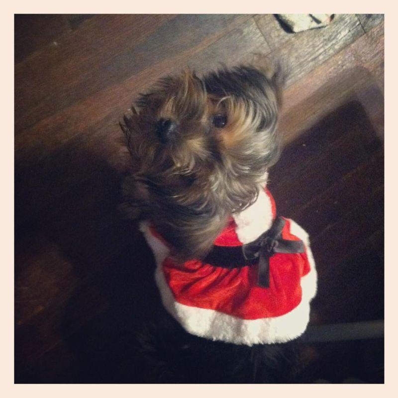 Tashi Christmas Dress
