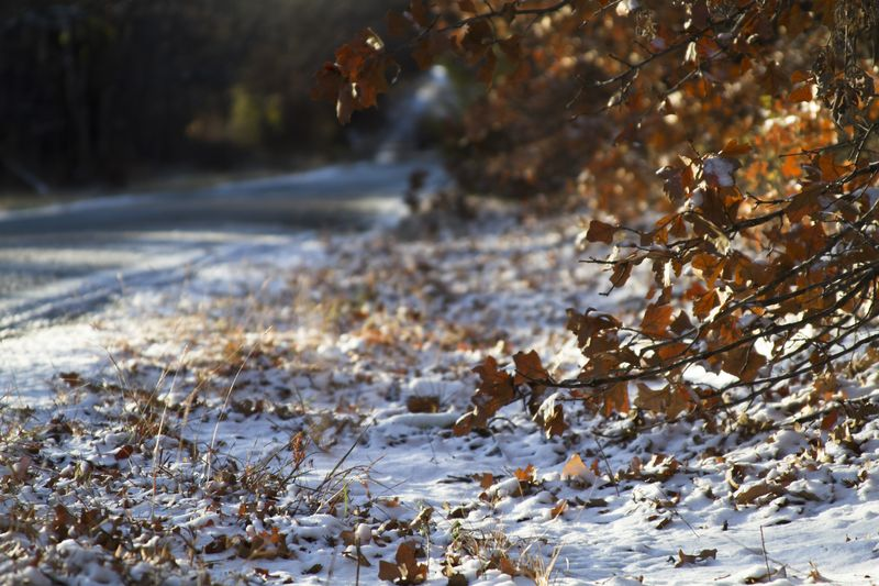 Snow on S&W Road