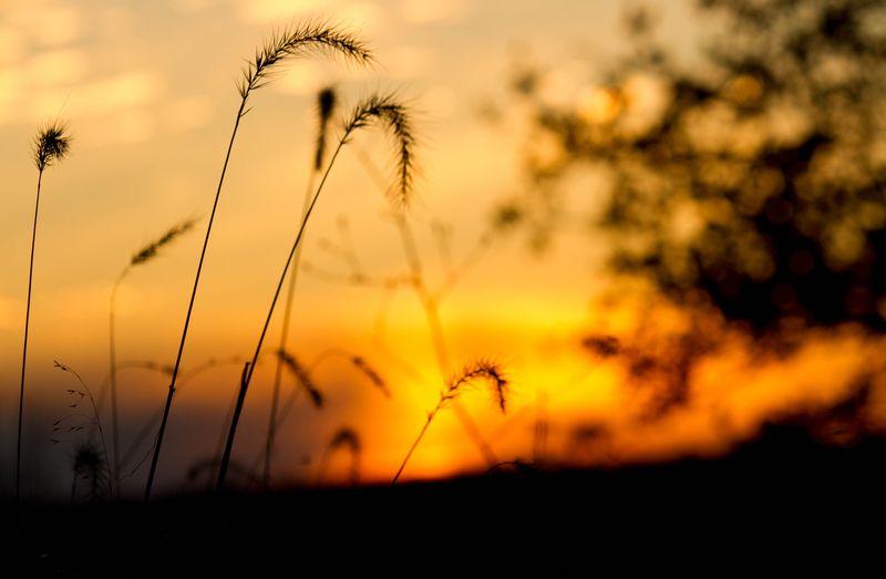 Memorable Sunset-6138