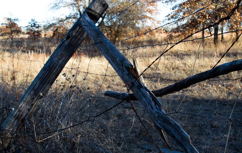 Old Fence-6405