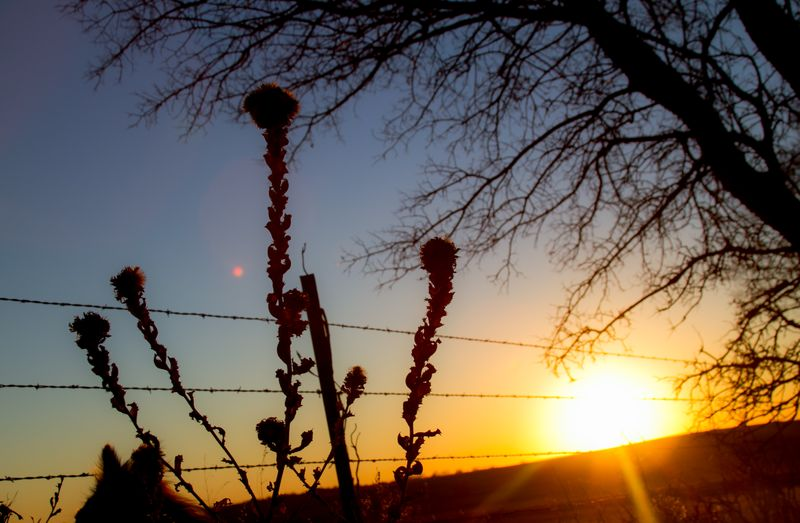 Sunset on the fence-6467