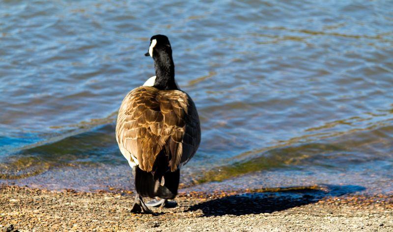 Wildlife at Raymond Gary State Park-7080