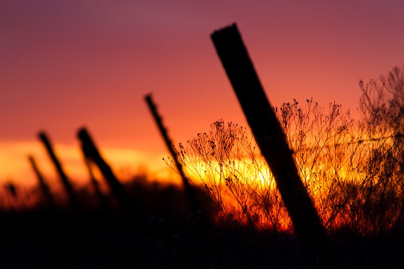 Barbed Wire Sunset-0064