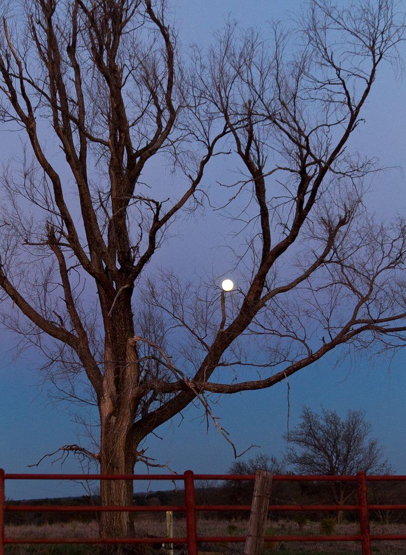 Moon and tree at dusk-2152