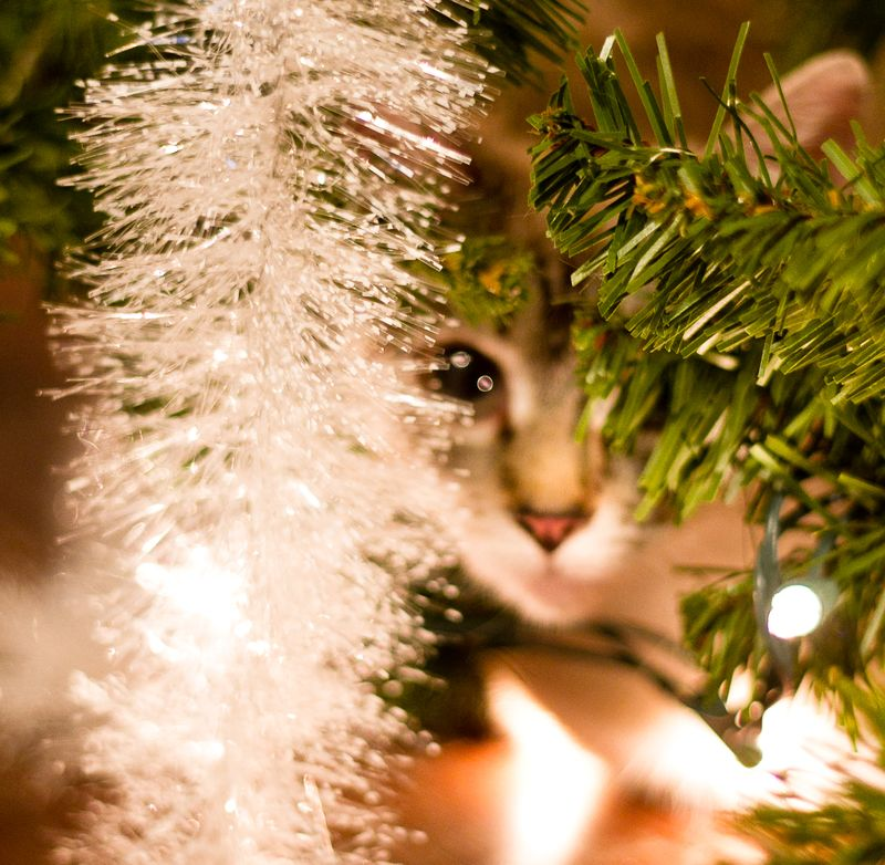 Iz hiding under ur tree-1