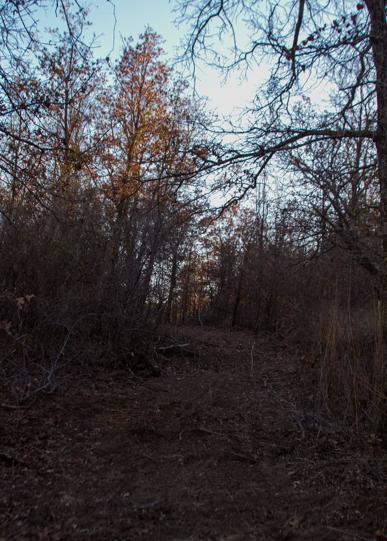 Trails-6424